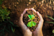 top view hand holding young plant growing. concept eco and earth day