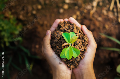 Foto Murales top view hand holding young plant growing. concept eco and earth day
