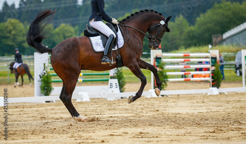 Horse dressage with rider in the dressage quadrangle, photographed from the side in a gallop pirouette.. © RD-Fotografie