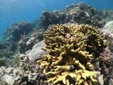 fond marin, Snorkeling, Cabilao, Philippines