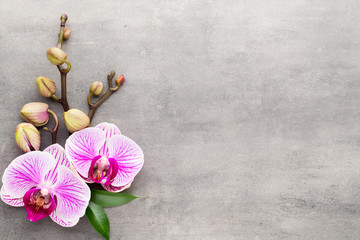Spa orchid theme objects on grey background. © gitusik