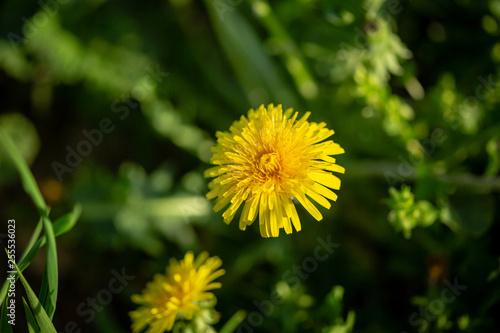 One flowers on green background - 255536023