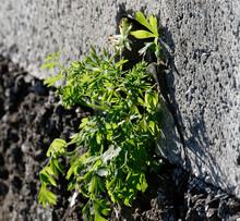 """Постер, картина, фотообои """"lizard inside fresh herb on top a wall"""""""