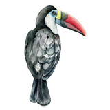 Watercolor toucan. Hand painted illustration with tropical bird isolated on white background. Illustration for design, print, background. - 255631222
