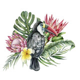 Watercolor tropical toucan and flowers bouquet. Hand painted bird, protea and plumeria isolated on white background. Nature botanical illustration for design, print. Realistic delicate plant. - 255631287