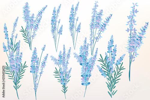 Big spring set of lavender flowers for design