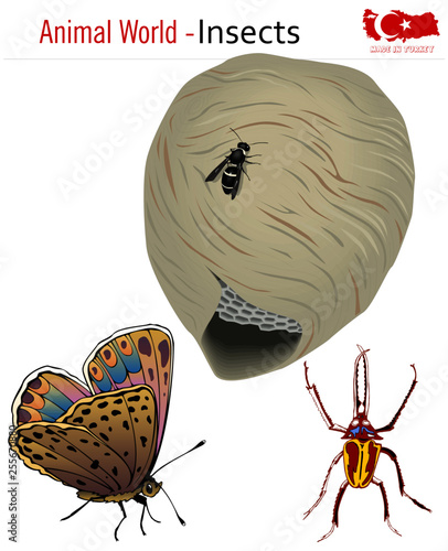 Animal world - insects, vector, eps