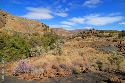 Scenic landscape with wildflowers, Mountain Zebra National Park, South Africa.