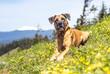Leinwanddruck Bild - dog on dog mountain