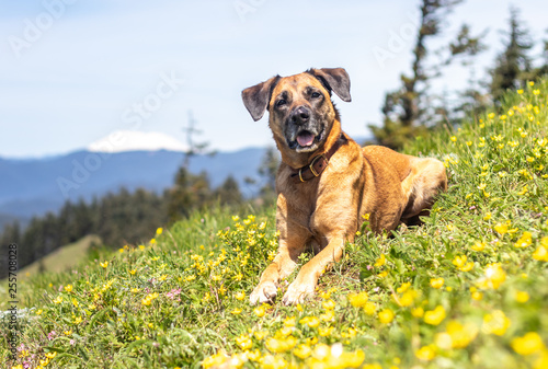 Leinwanddruck Bild dog on dog mountain