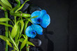 Beautiful spa composition: blue orchid flowers and green bamboo stems on the wet black massage stones and slate background