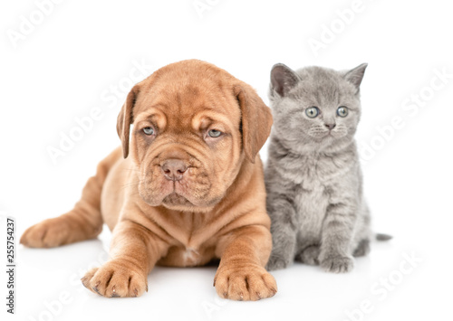 Puppy lying with funny kitten in front view looking at camera. isolated on white background © Ermolaev Alexandr