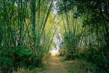 Fototapeta Bambus - Bamboo plantation in the dry season in Cambodia © Broshutter