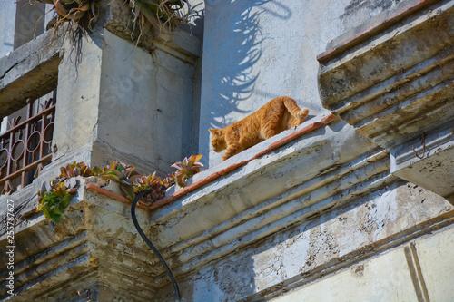 obraz PCV Calle Amagura, Stadtansicht, Havanna, Kuba