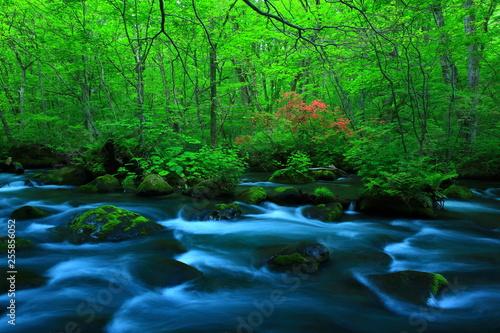 Foto Murales 新緑の奥入瀬渓流