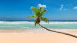 Coco palm over sandy beach with tropical sea. Summer vacation and travel concept.