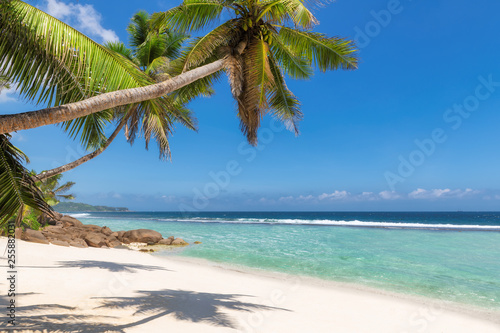 Caribbean sunny beach with palm on white sand and the turquoise sea on Jamaica Caribbean island. - 255882031