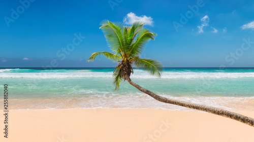 Coco palm over sandy beach with tropical sea. Summer vacation and travel concept.   - 255882040