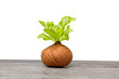 Young plant with green leaves in the pots on wooden table - 255937633