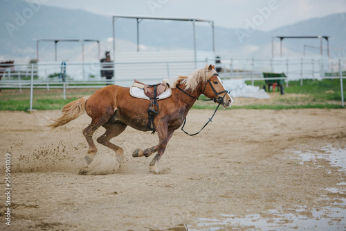 brown horses running across the field