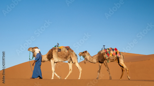 Dromedary caravan with blue sky in the Sahara desert