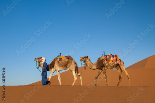 Dromedary caravan in the Sahara