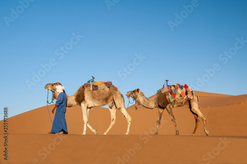 Dromedaries with Tuareg guide in Sahara desert