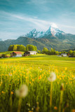 Idyllic landscape in the Alps with blooming meadows in springtime