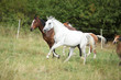 Amazing batch of horses on pasturage - 255988022
