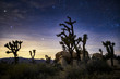Leinwanddruck Bild - stars in the sky at joshua tree national park