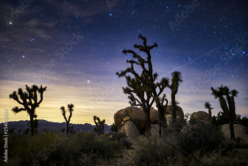 Leinwanddruck Bild stars in the sky at joshua tree national park