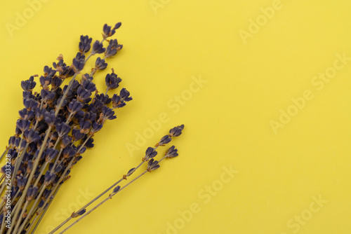 dry lavender on colored background - 256033228