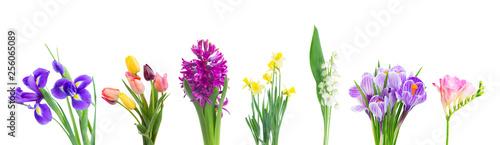 violet hyacinth flowers