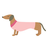 Dressed badger-dog flat illustration
