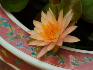 Flor naranja en macetero chino