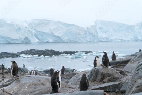 Fototapeten Pinguine Penguins in Antarctica