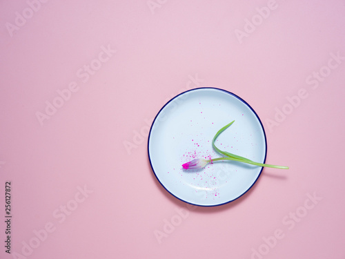 A white plate on a pink background with tulips