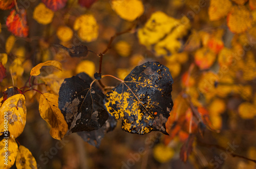fototapeta na ścianę autumn leaves