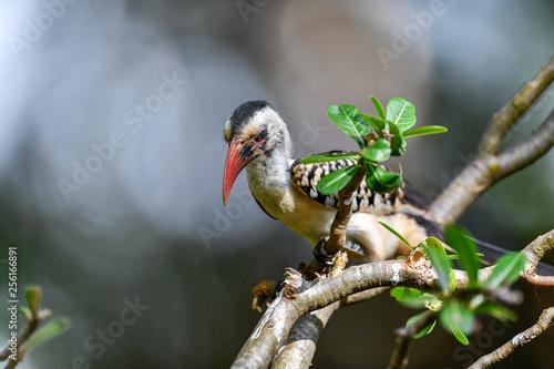 hornbill bird on the tree