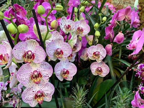Orchid flower in garden at winter or spring day - 256232488