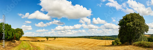 Idyllic landscape with field and sky in summer