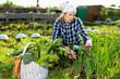 Joyful young woman harvesting vegetables in a basket