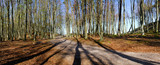 Panorama, spring in forest, young leaves on the branches