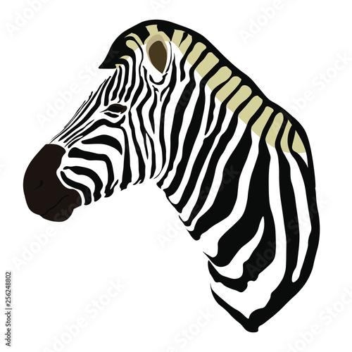 Illustration of a zebra head, side facing - 256248802