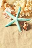 Sea shells with sand as background. Seashells.