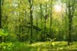 Leinwanddruck Bild - Frühling 480