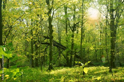 Leinwanddruck Bild Frühling 480