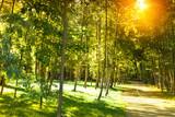 Fototapeta Fototapety na ścianę - Beautiful sunshine park. © kuzina1964