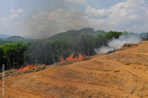 Deforestation. Logging and burning rainforest. Forest fire environmental problem