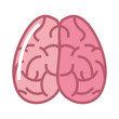 human brain organ